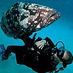 Dive with Grouper