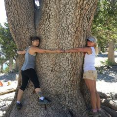 tree-BB73-FE39A9941721