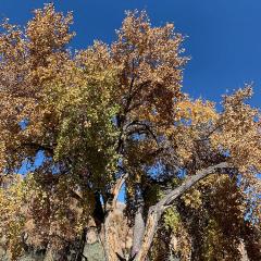 tree-EA6DF1A8B984