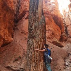 tree-hug-0590