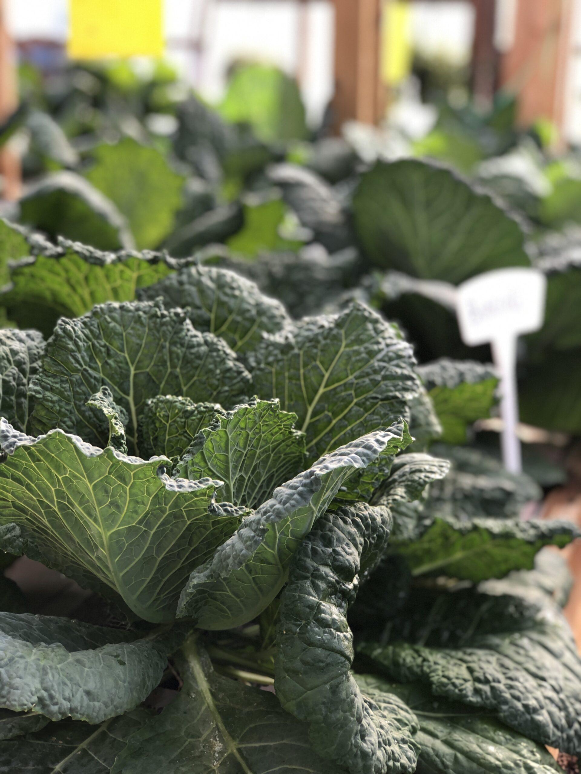 Teaching Gardening and Restoring Communities