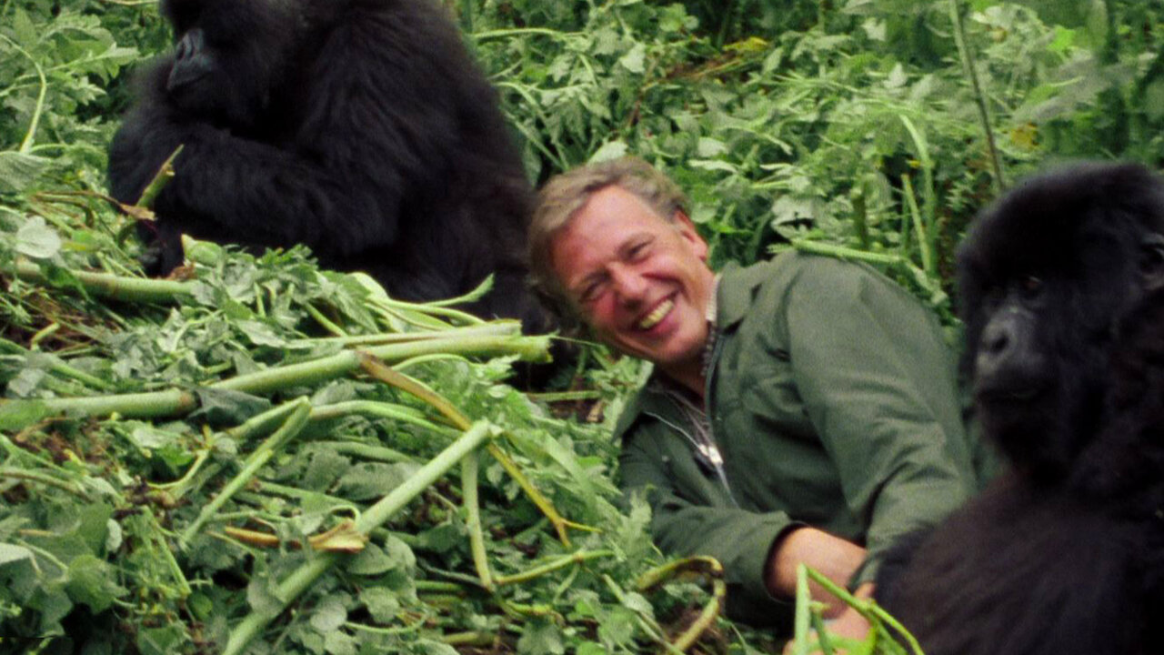 David Attenborough A Life On Our Planet 2