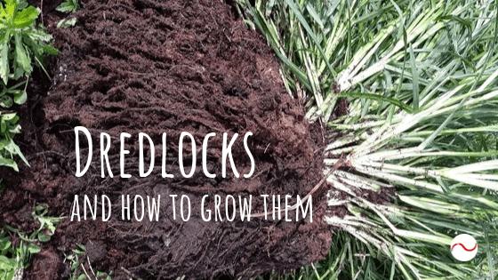Dredlocks