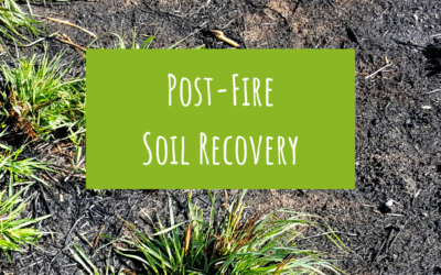 Post-fire soil recovery