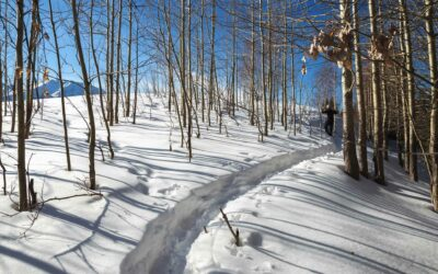 Snowshoeing In Aspen: Our 5 Favorite Trails