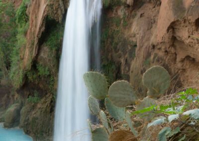 Havasu Falls with cactus in the foreground.