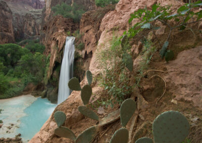 Another shot of Havasu Falls with cactus in the foreground.