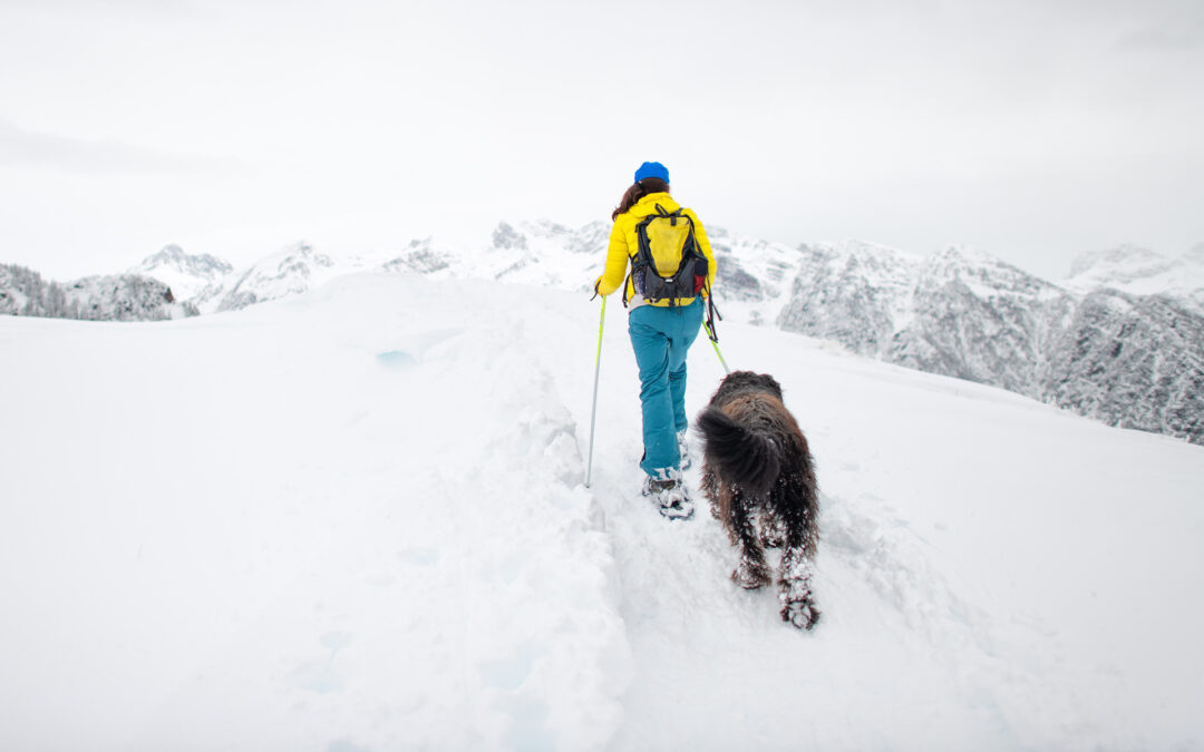 Snowshoeing in Durango: Our 7 Favorite Trails