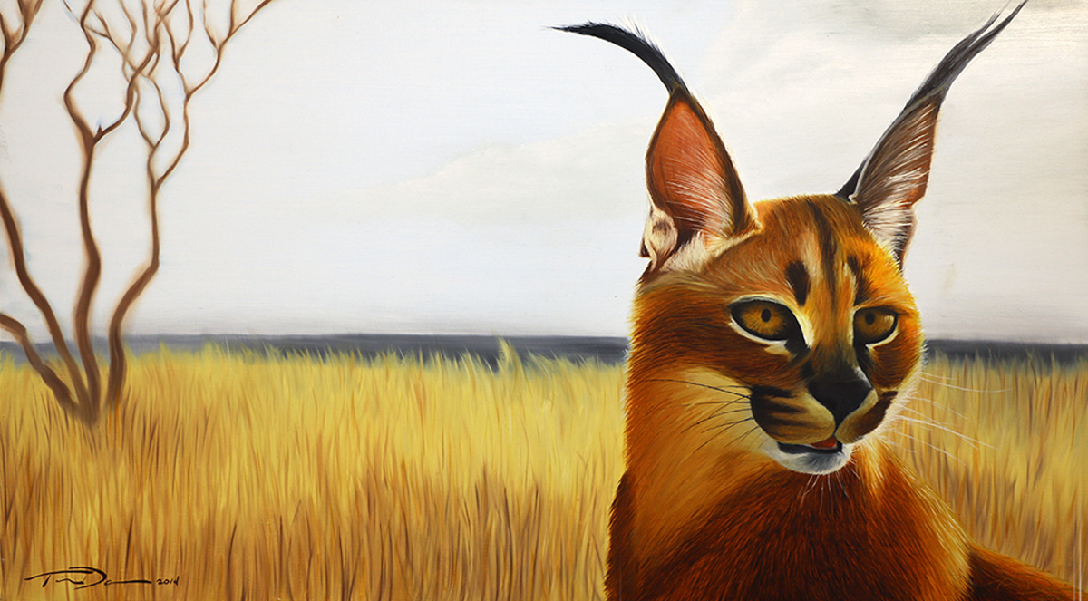 Caracal - Original oil painting by wildlife artist Timothy Davison of the Davison Art Company featuring a caracal looking out over a African plain. © COPYRIGHT TIMOTHY DAVISON