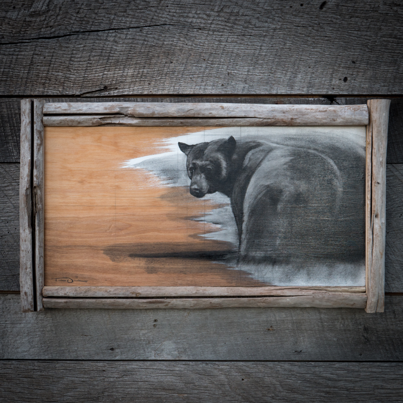 Bear Butt - Original oil painting by wildlife artist Timothy Davison of the Davison Art Company featuring a black bear looking backwards towards the viewer. Reference photo taken in Sequoia National Park. This simple black and white painting appears to come off the surface, revealing the wood grain beneath. Framed with a custom driftwood frame. © COPYRIGHT TIMOTHY DAVISON