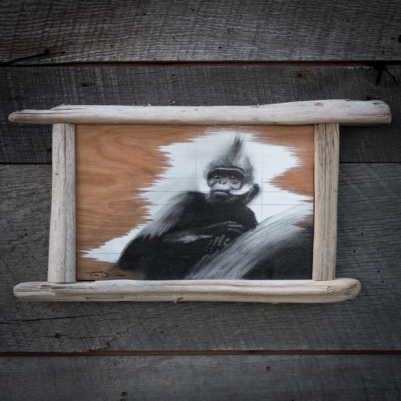 Francois Langur - Original oil painting by wildlife artist Timothy Davison of the Davison Art Company featuring a francois langur, looking out from the painting. This black and white painting appears to come off the surface, revealing the wood grain below. Framed with a custom driftwood frame. © COPYRIGHT TIMOTHY DAVISON