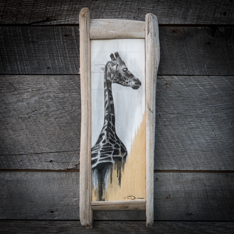 Giraffe Back - Original oil painting by wildlife artist Timothy Davison of the Davison Art Company featuring a reticulated giraffe from behind with his head turned looking back at the viewer while the spots melt into dripping paint. This simple black and white painting appears to come off the surface, revealing the wood grain beneath. Framed with a custom driftwood frame. © COPYRIGHT TIMOTHY DAVISON