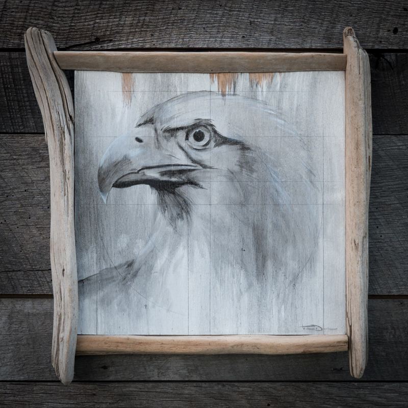 Rough Eagle - Original oil painting by wildlife artist Timothy Davison of the Davison Art Company featuring a bald eagle. This simple black and white painting appears to come off the surface, revealing the wood grain below. Framed with a custom driftwood frame. © COPYRIGHT TIMOTHY DAVISON