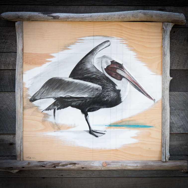 Stearn's Pelican - Original oil painting by wildlife artist Timothy Davison of the Davison Art Company featuring a brown pelican stretching its wings and standing on one foot. This painting appears to come off the surface, revealing the wood grain below. Framed with a custom driftwood frame. © COPYRIGHT TIMOTHY DAVISON