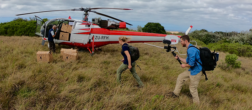 Tim Davison and Stephanie Arne filming the short film SAVING PENGUINS walking towards helicopter in South Africa