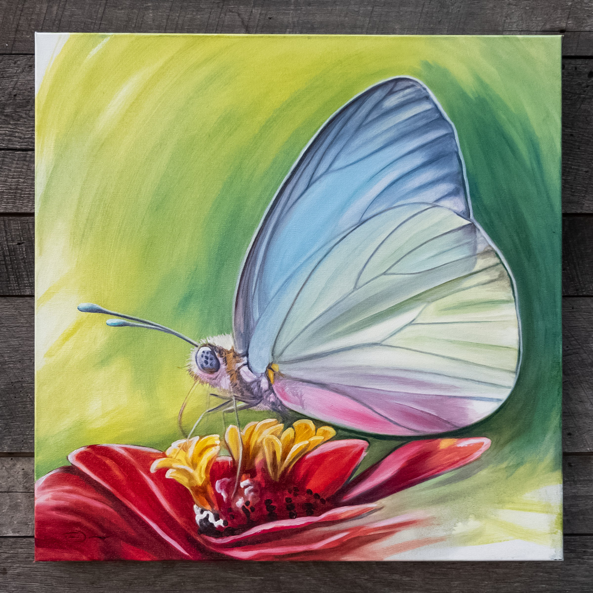 Chase's Butterfly - Original oil painting by Timothy Tim Davison of the Davison Art Company featuring a butterfly sitting on a flower, southern white or pirpinto butterfly on a zinnia flower.