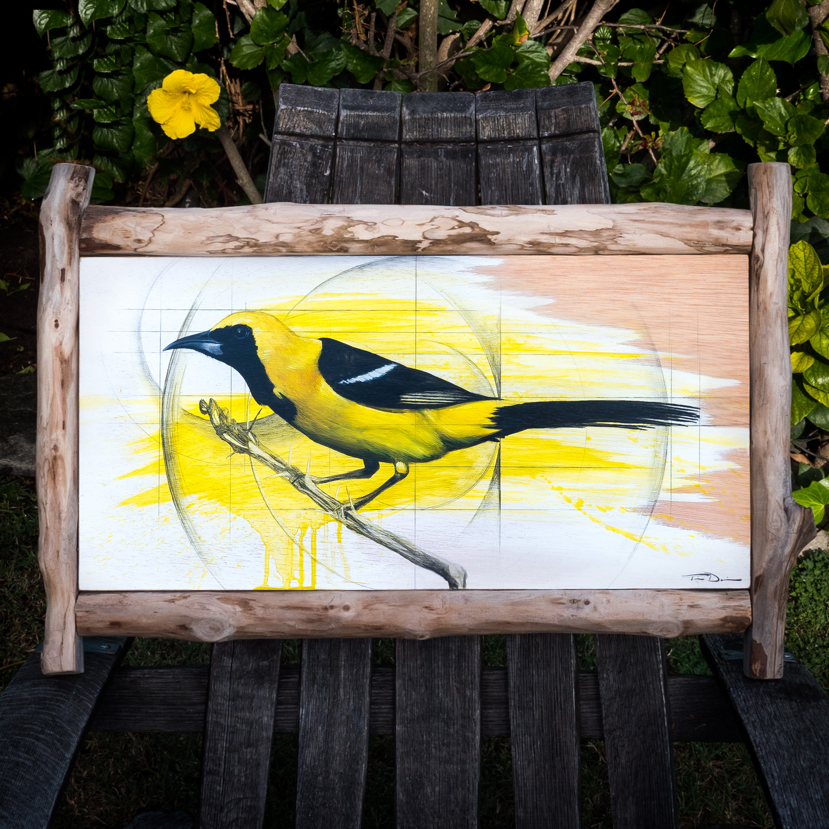 Hooded Oriole - Original oil painting by wildlife artist Timothy Davison of the Davison Art Company featuring a hooded oriole perched on top of a branch with thorns. Circles and splashed yellow paint in the background. This colorful painting appears to come off the surface, revealing the wood grain in the background. Custom framed with a driftwood frame. © COPYRIGHT TIMOTHY DAVISON