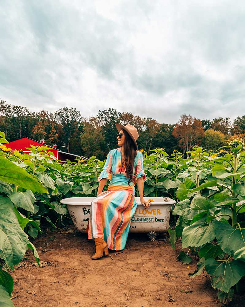 Sitting on bathtub in sunflower field