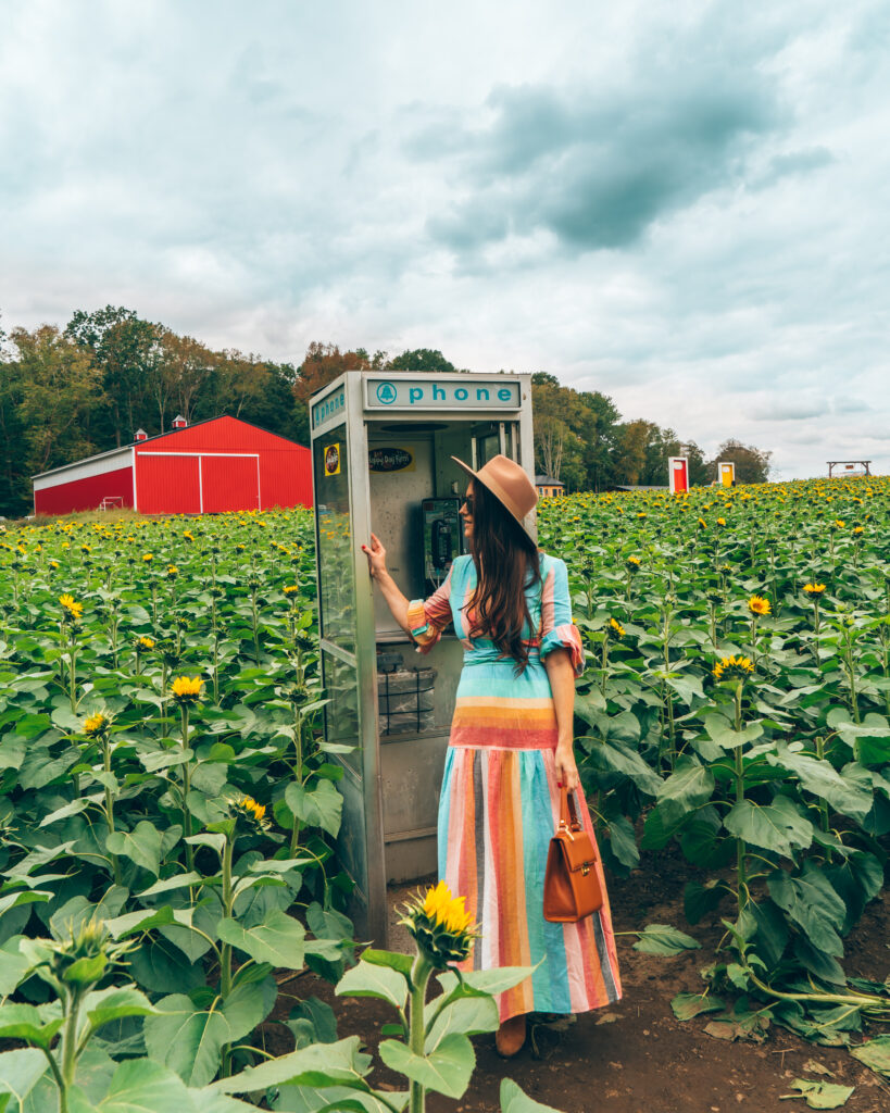 Woman at payphone in sunflower field