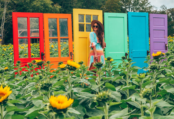 Rainbow Doors in a Sunflower Field