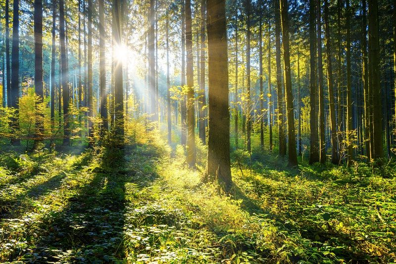sun-shining-in-a-forest