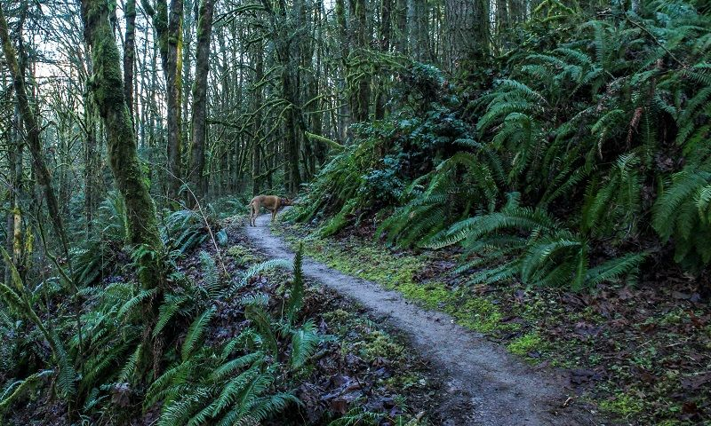 Bare-Trees-and-Ferns-cm