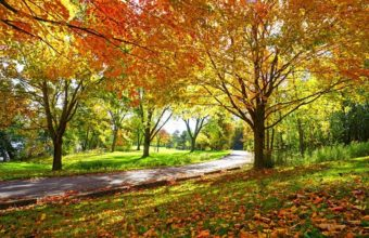 Sunny-Path-Through-Sugar-Maple-Trees-in-Autumn-cm