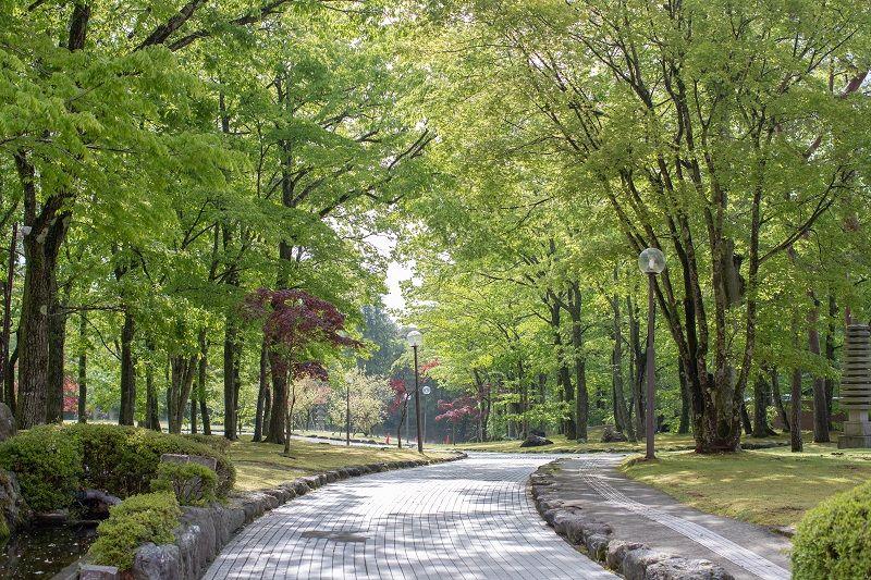 walkway-with-street-lamp-in-garden-cm