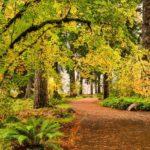 A-path-through-autumn-foliage-forest-in-Silver-Falls-State-Park,-Oregon,-USA-cm