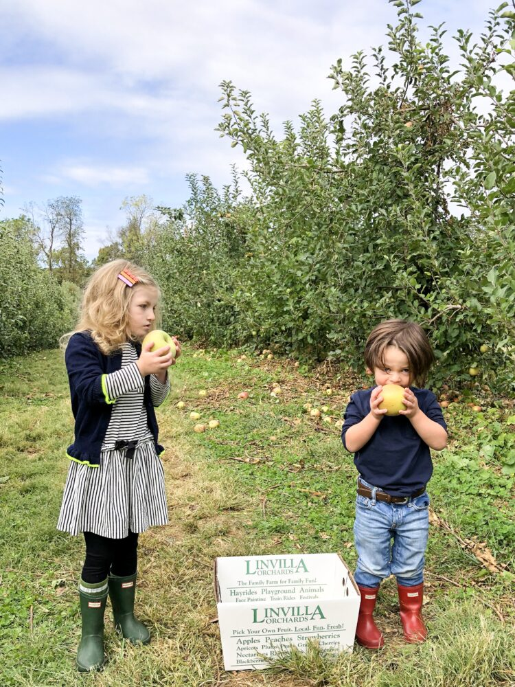 On Apple Picking, Thanksgiving, & Gratitude