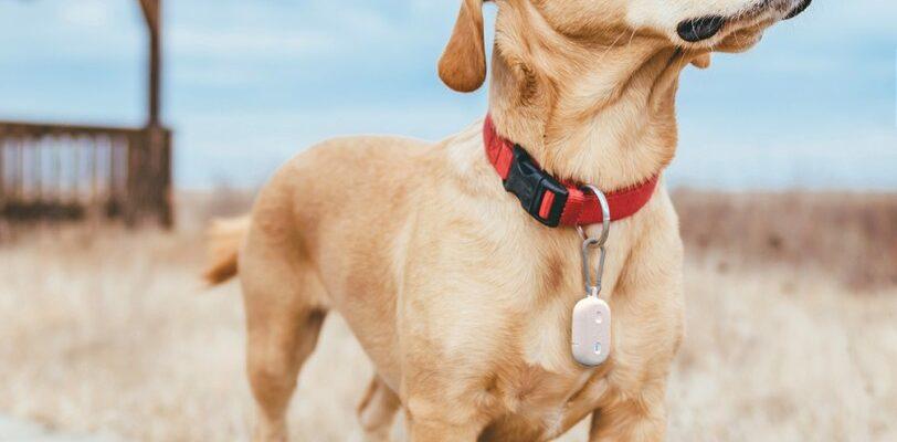 Amazon Sidewalk Pet Tracker