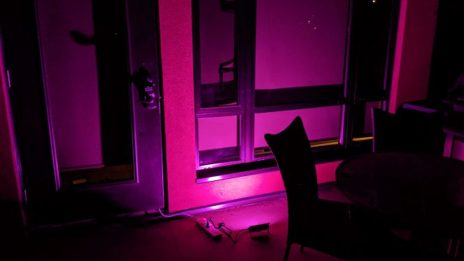 Novostella Flood Light Purple