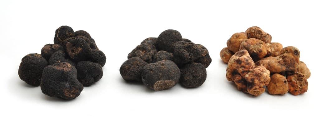 Group of Winter Truffles