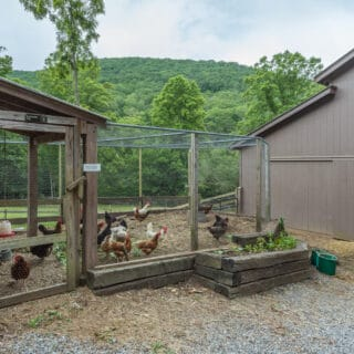 The Cove at Fairview has three chicken coops - The Cove at Fairview Vacation Rentals - Asheville NC