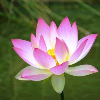 Lotus Flower - The Cove at Fairview - Vacation Rentals - Asheville, NC