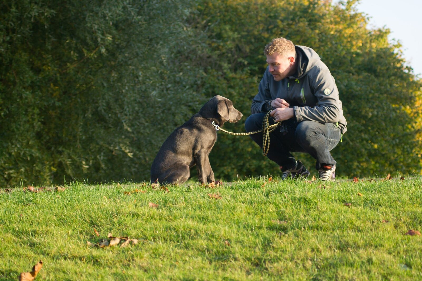 How to be a conscientious dog owner