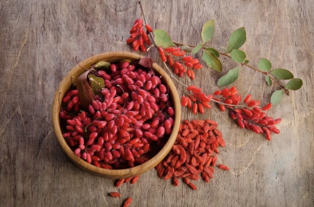 Barberries The Best Berry For digestive issues