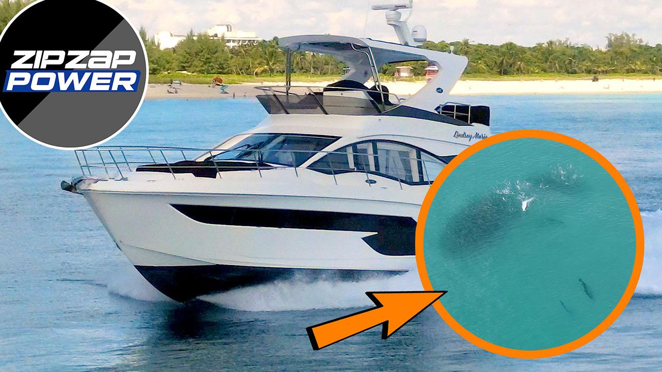 Best Haulover Yachts