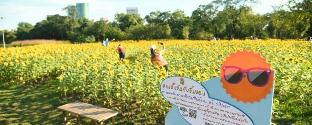 Celebrate holiday season with Bangkok Flora Festival🌻🌺🌼🌹🌸🌷📸