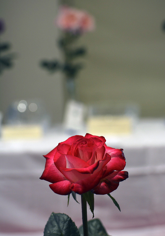 greater atlanta rose society