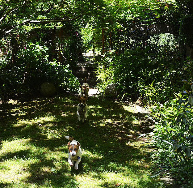 Ryan Gainey's dogs charge through the garden.