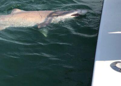 shark-trips-00