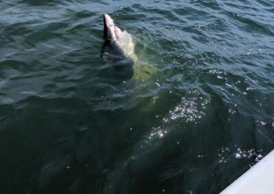 shark-trips-04