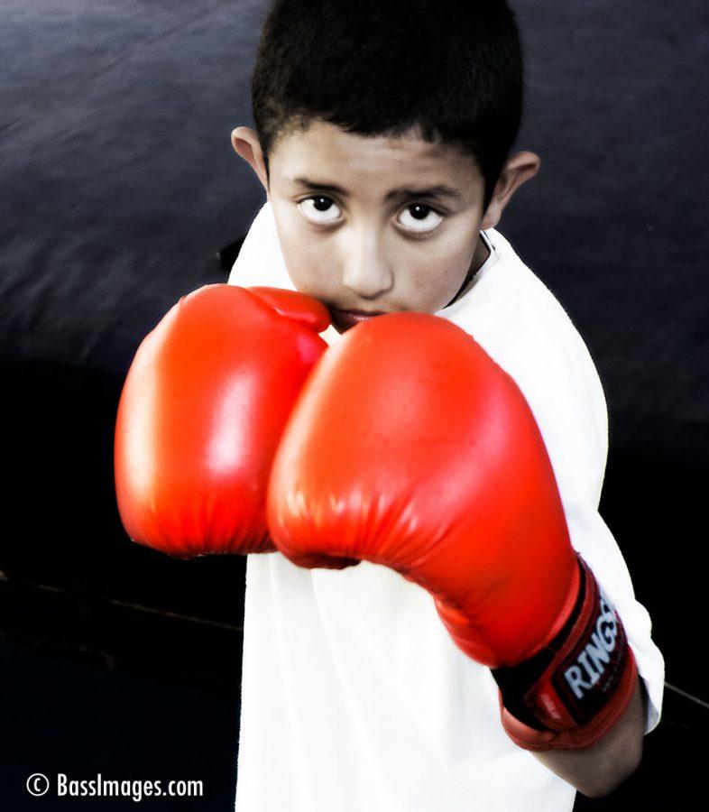 boxer boy expt2
