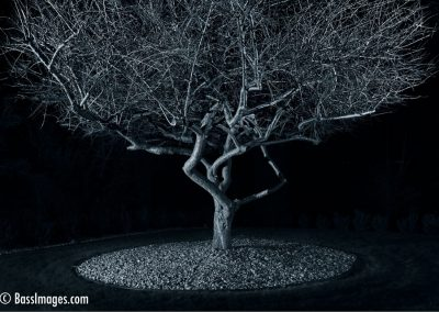 Katie tree-2