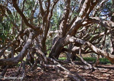 Tree Quartet 2013