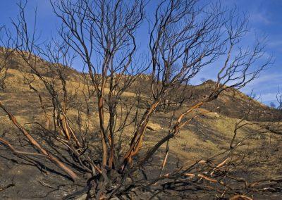 burn tree merged