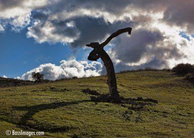 scarecrow tree_0268_alt