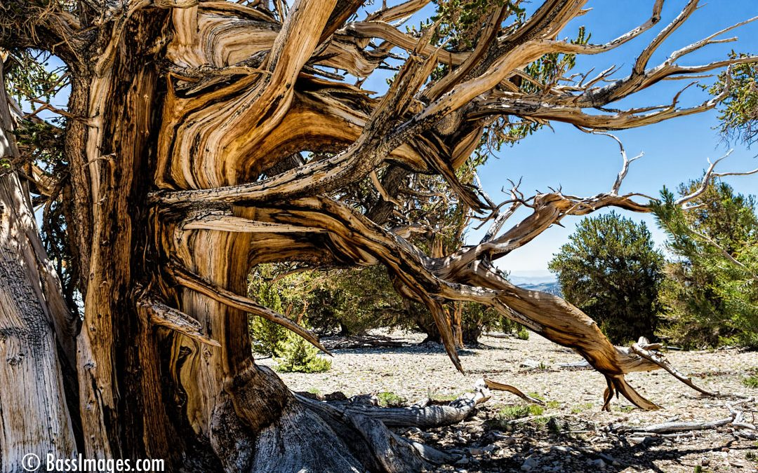 A visit to earth's oldest living organisms