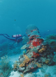 Castro Perez Dives on the Coral Covered Remains of the Antilla